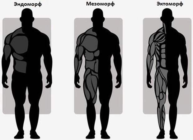 Программа тренировок для эндоморфа, на массу и рельеф в тренажерном зале