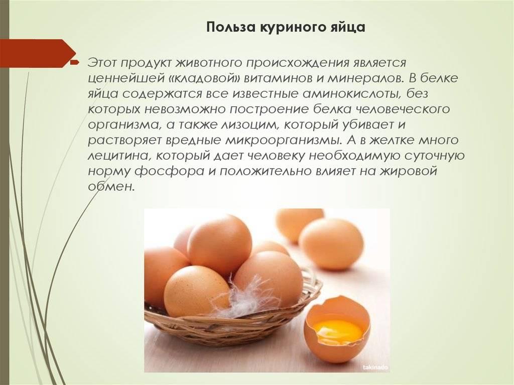 Яйца - калорийность, польза и вред, полезные свойства