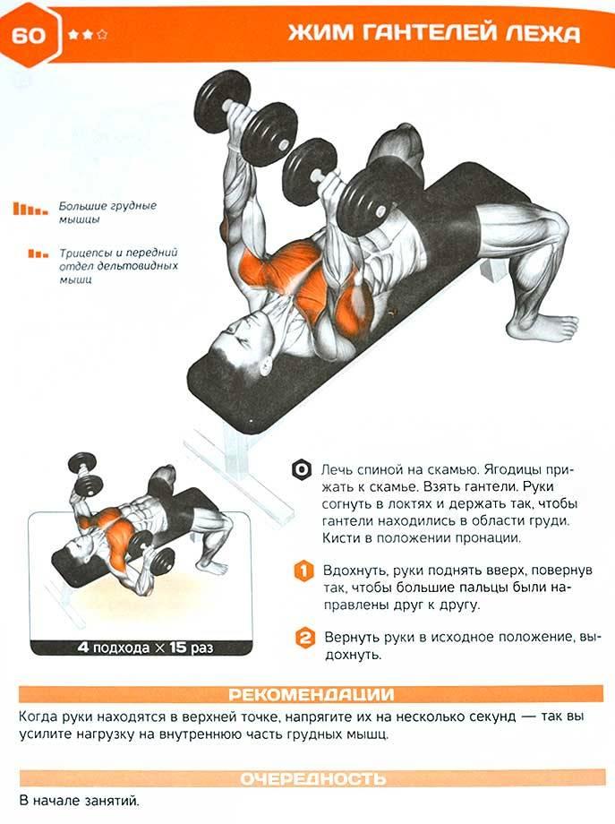Упражнение жим гантелей лёжа на наклонной скамье