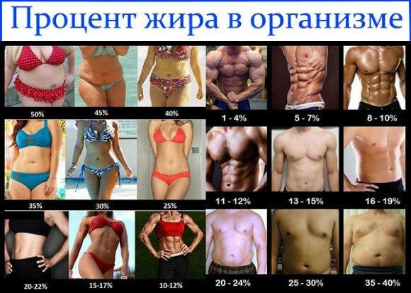 Процент жира в организме: норма подкожных и висцеральных отложений для женщин и мужчин