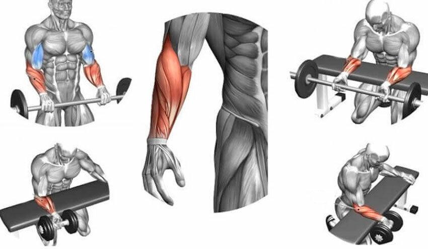 Как накачать предплечья в домашних условиях: комплекс эффективных упражнений и рекомендации | rulebody.ru — правила тела