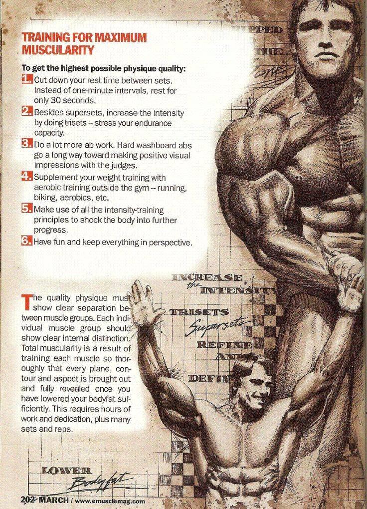 Тренировки арнольда шварценеггера: советы для груди и спины