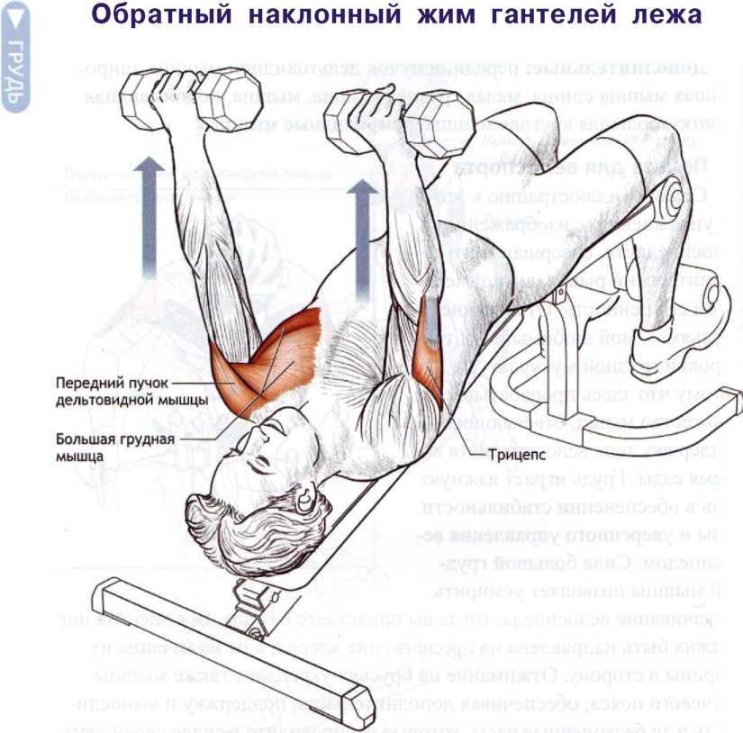 Упражнения для грудных мышц нижней части