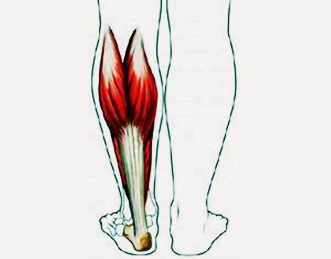 Икроножная и камбаловидная мышцы: «второе сердце» вашего организма