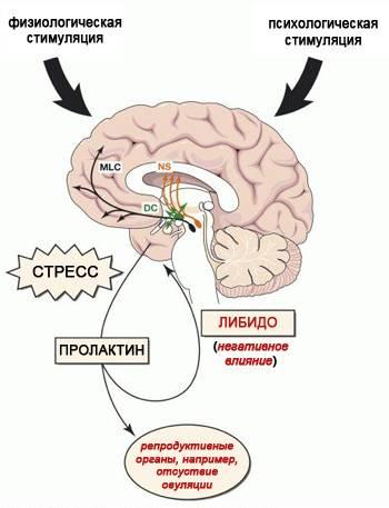 Пролактин повышен у женщины: причины и симптомы. советы гинеколога.