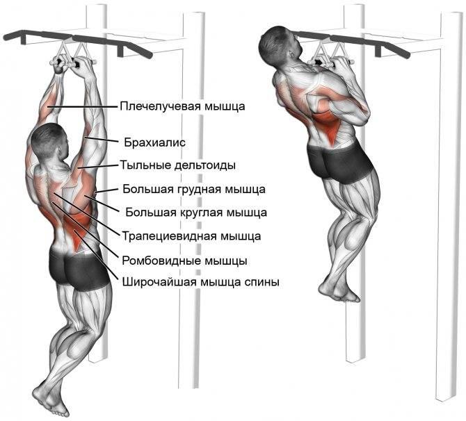 Подтягивания обратным хватом - какие мышцы работают? советы, рекомендации - tony.ru