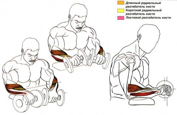 Как укрепить запястья рук: лучшие упражнения.    бомба тело