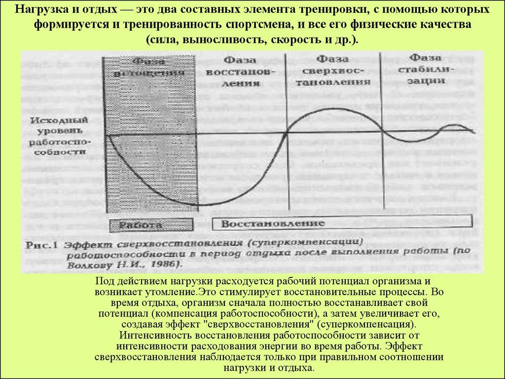 Принцип циклирования нагрузок: периодизация тренировок
