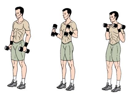 Упражнение «молот»: эффективная тренировка рук на бицепс с помощью упражнения молоток с гантелями | rulebody.ru — правила тела