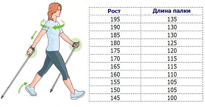 Палки для скандинавской ходьбы: как правильно подобрать по росту, лучшие модели