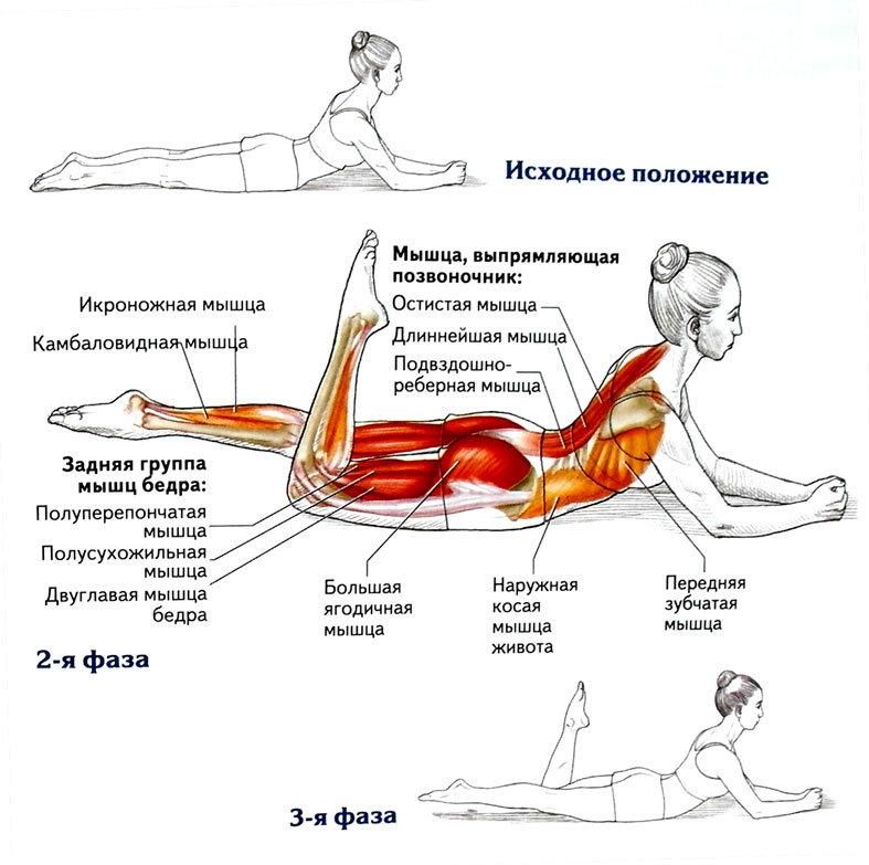 Как правильно делать упражнение «ножницы» для пресса и ног?