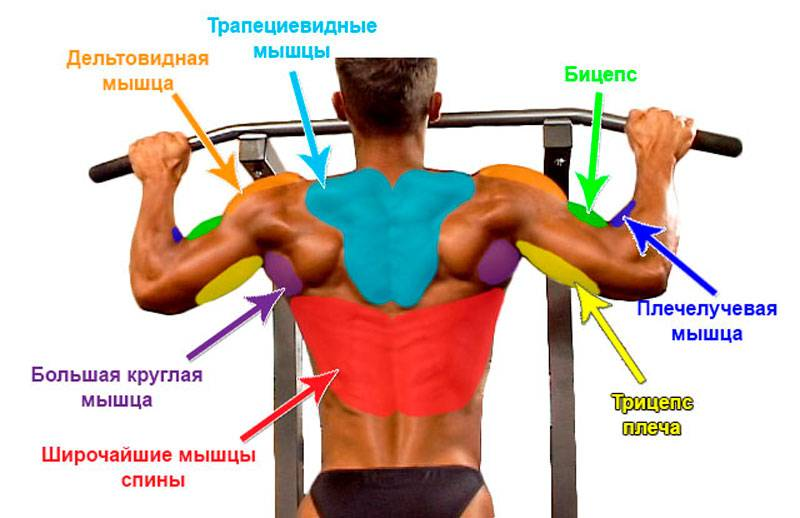 Подтягивания на турнике: как правильно это делать, какие мышцы работают, виды хватов