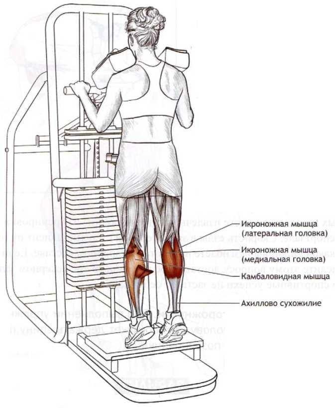 Жим ногами в тренажере