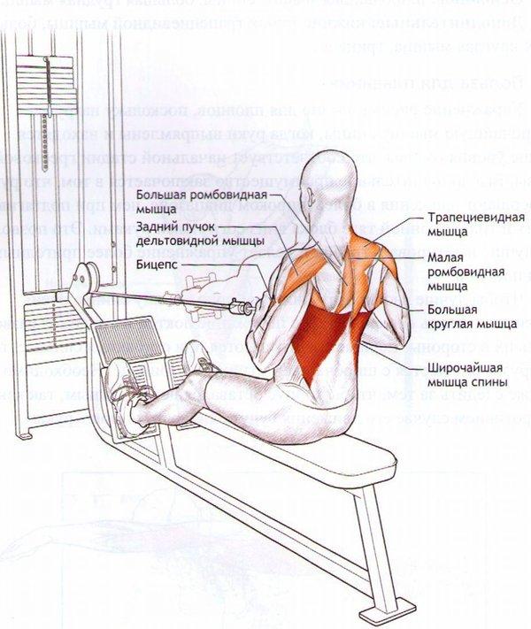 Тяга блока к груди - основные правила и подбор упражнений (79 фото)