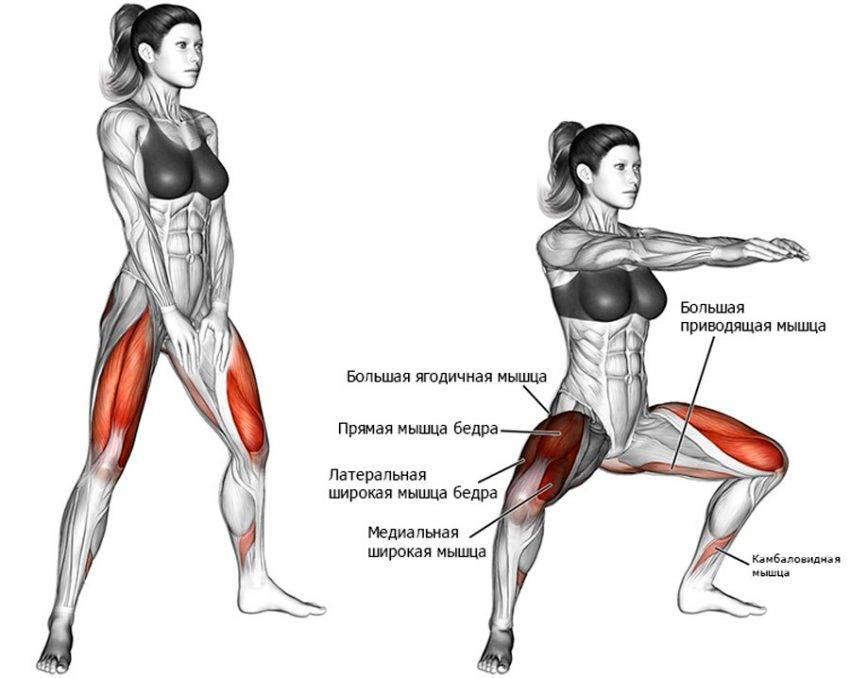 Приседания: какие мышцы работают (у женщин и мужчин) со штангой, с гантелями, без веса, фронтальные, виды приседаний, картинки, фото
