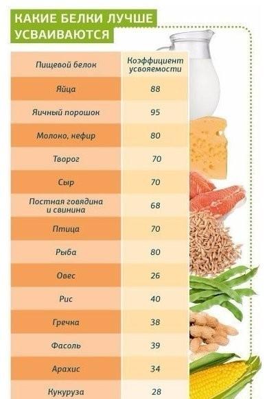 Сколько белка усваивается за один прием пищи