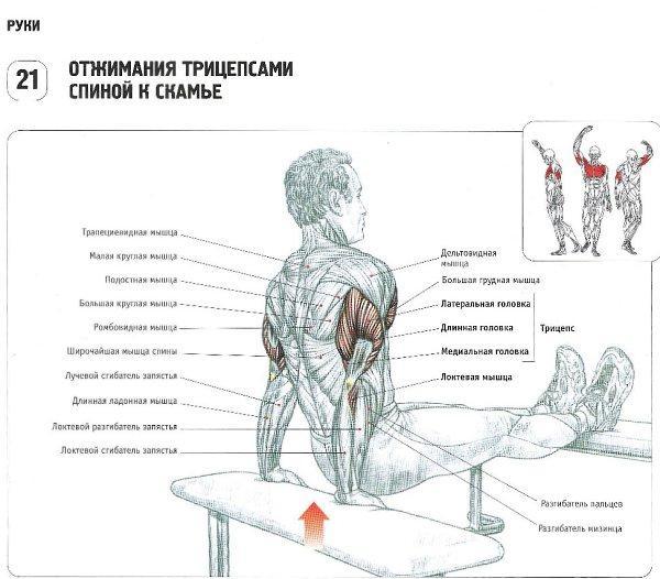 Упражнения на трицепс – эффективный комплекс, а также лучшие методики для занятий в домашних условиях. топ-10 лучших тренировок!