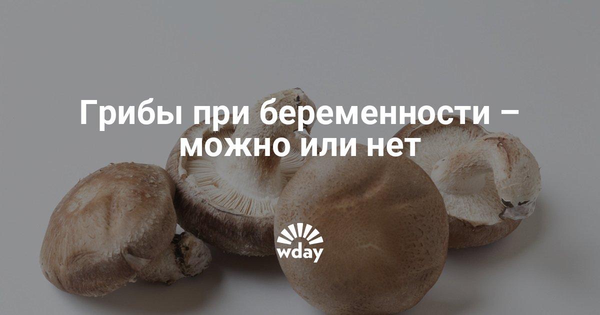 Кому не следует увлекаться грибами? полезны ли грибы для здоровья?