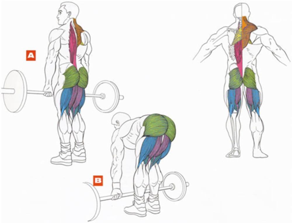 Румынская становая тяга со штангой — техника и польза » спортивный мурманск