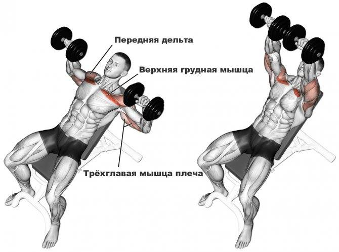 Жим арнольда: техника выполнения упражнения сидя и стоя