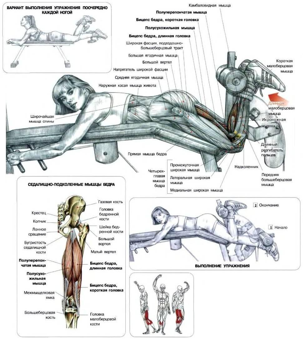 В чем эффект разгибания ног в тренажере: совет тренеров и нюансы выполнения упражнения (155 фото и видео)