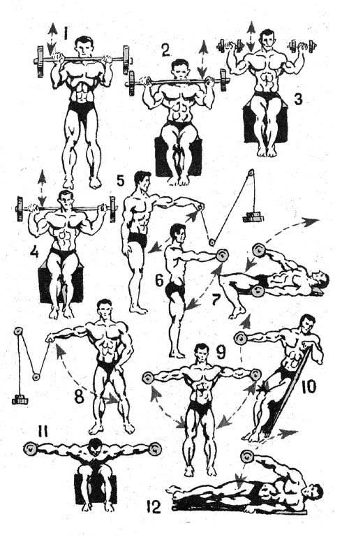 Атлетическая (силовая) гимнастика для девушек в учебном процессе вуза