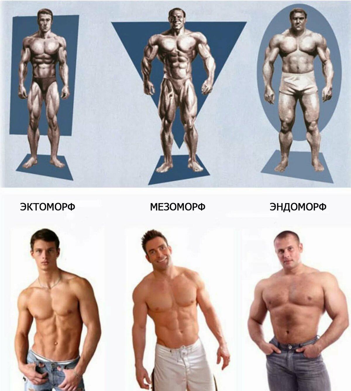 Программы тренировок для мезоморфа эктоморфа эндоморфа