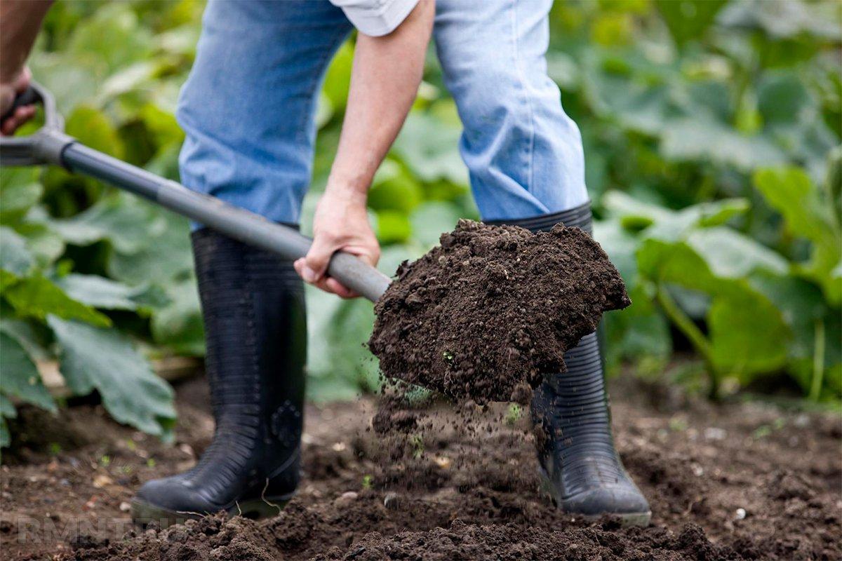 Здоровье дачника: 7 золотых правил безопасной работы на грядках   полезно (огород.ru)