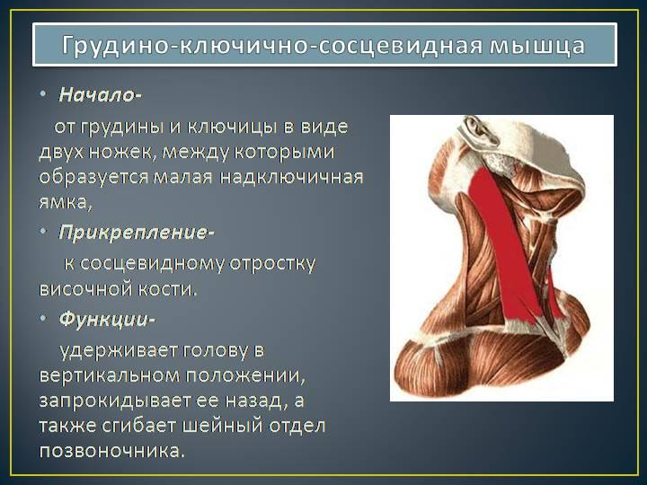 Как укрепить мышцы шеи