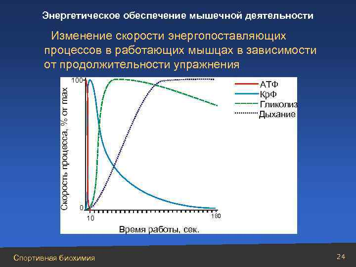 Энергообеспечение мышечной деятельности