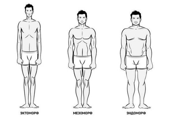 Эктоморф, мезоморф, эндоморф – типы телосложения (соматотипы по шелдону)     krok8.com - фундаментальная стратегия развития
