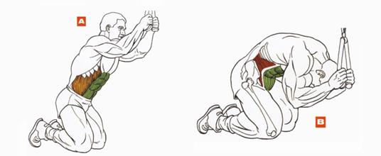 Упражнение молитва на пресс: техника выполнения, какие мышцы работают