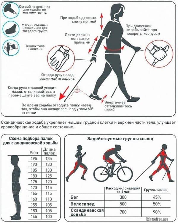 Скандинавская ходьба для начинающих: техника, высота палок, видео