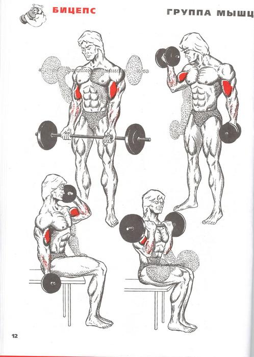 Как накачать мышцы и нарастить мускулатуру? главные правила | фитсевен