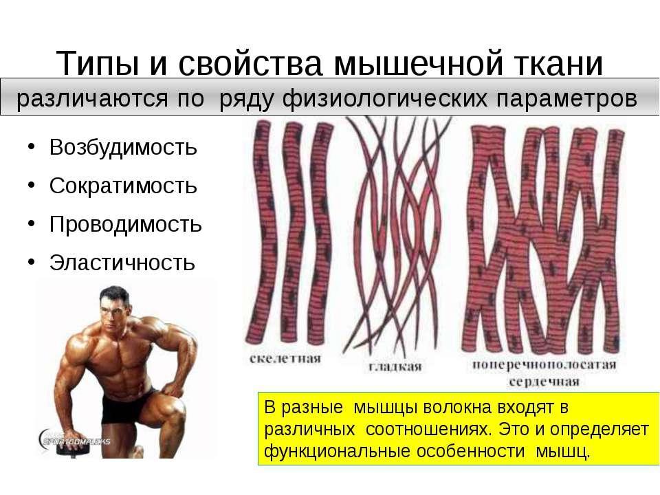Спорт как качать мышцы со стопроцентной эффективностью