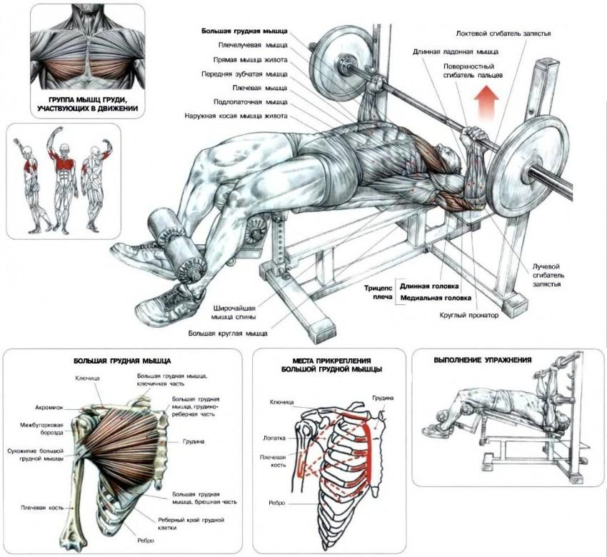 Как накачать грудные мышцы в домашних условиях мужчине гентелями, без железа, отжиманиями