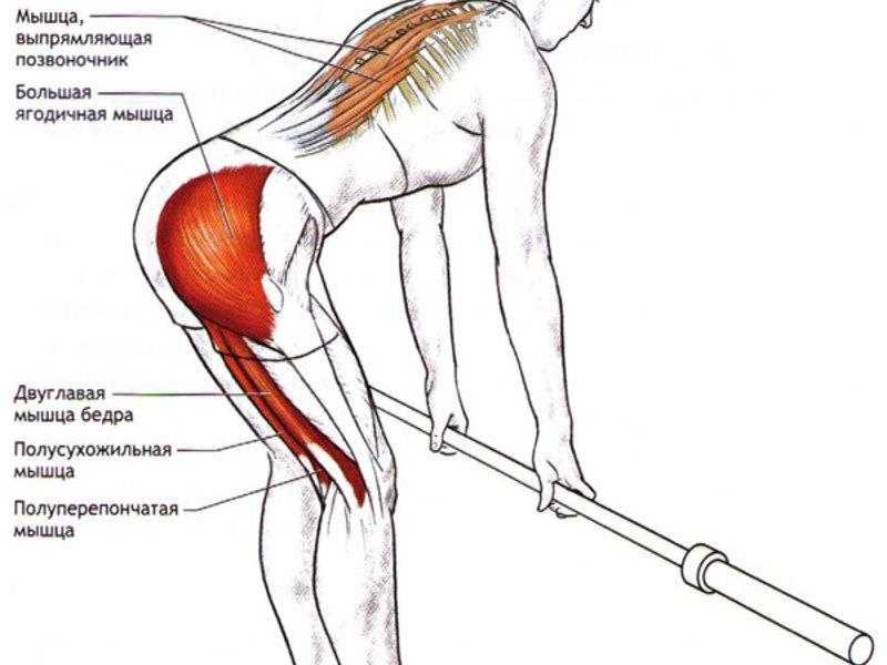 Румынская тяга со штангой: описание, задействованные мышцы, техника