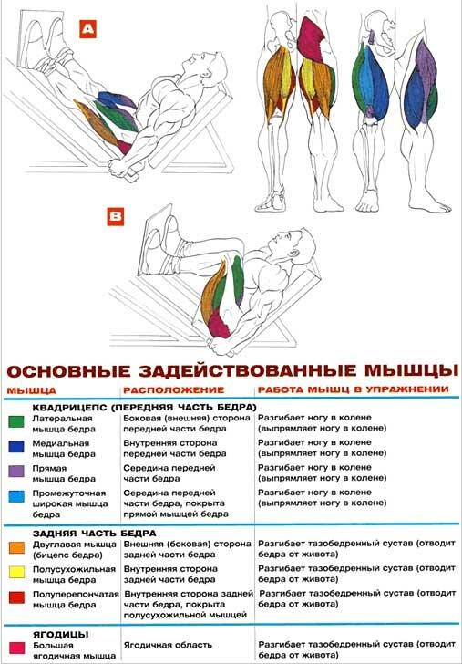Жим ногами – обзор самой эффективной техники выполнения. все тонкости и секреты для начинающих. 90 фото + инструкция с видео