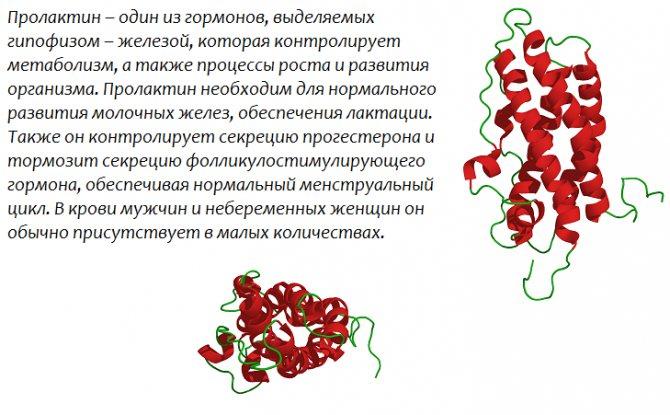 Низкий пролактин у женщин: причины пониженного уровня гормона, симптомы, профилактика и лечение