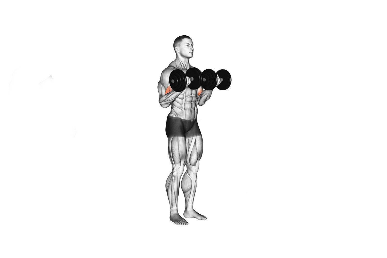 Техника выполнения и вариации упражнения «молот» для тренировки бицепса