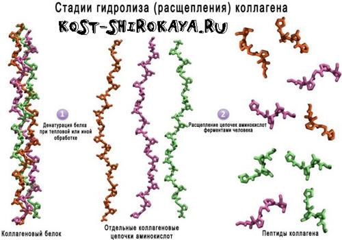 Гидролизованный коллаген (hydrolyzed collagen): свойства и применение в косметике — haircolor.org.ua