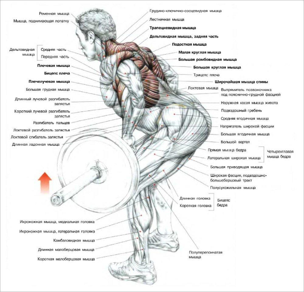 Как накачать рельефные мышцы за 1 месяц: отличный план тренировок для получения рельефного тела за 30 дней