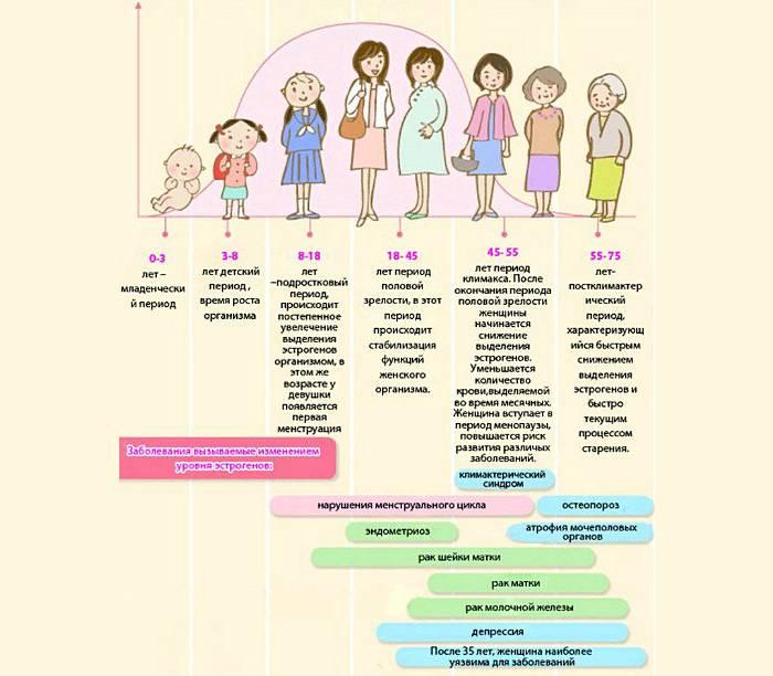 Эстроген у женщин: что это за гормон, где вырабатывается, как действует и на что влияет эстроген в организме женщины?