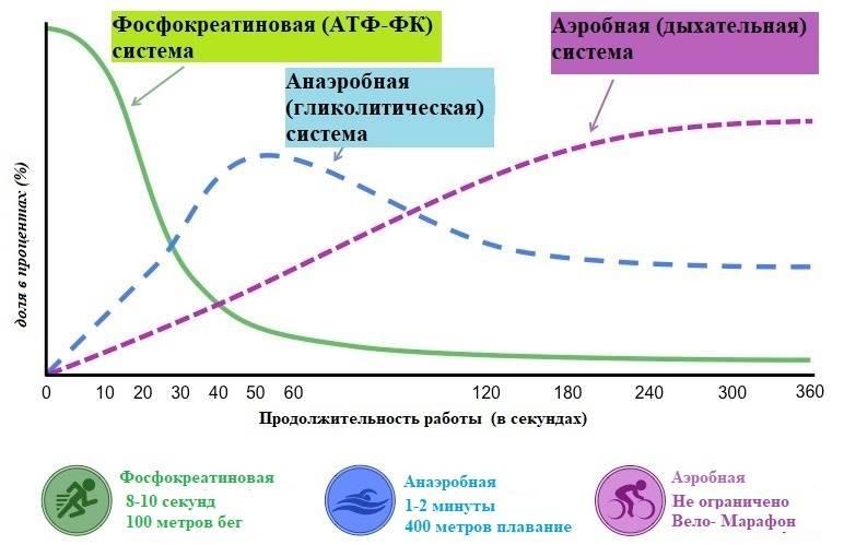 Глава 1. основы энергообеспечения мышечной деятельности