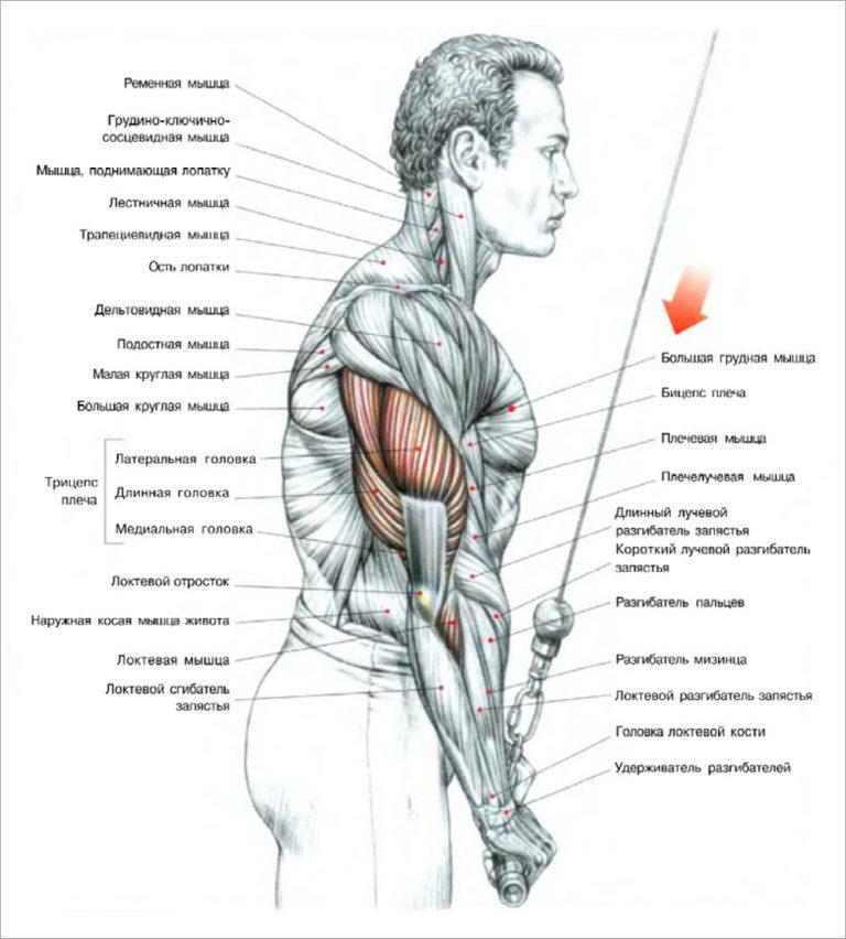 Тройной штурм: тренировка трицепсов и бицепсов