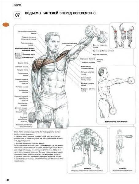 """Подполье 124. принцип """"пирамиды"""" для роста мышц"""