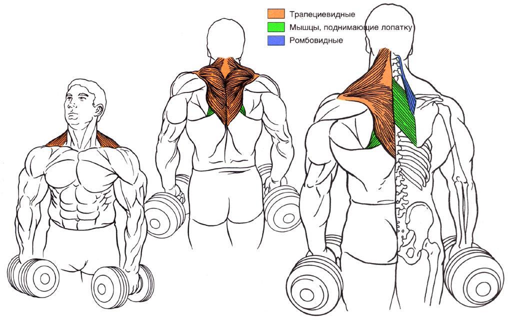 Как накачать мышцы шеи мужчинам дома — спорт и красота