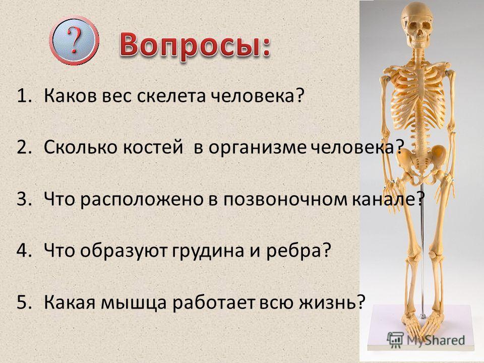 Могут ли быть тяжелые кости у человека? - мнение исследователей, как укрепить костную ткань,