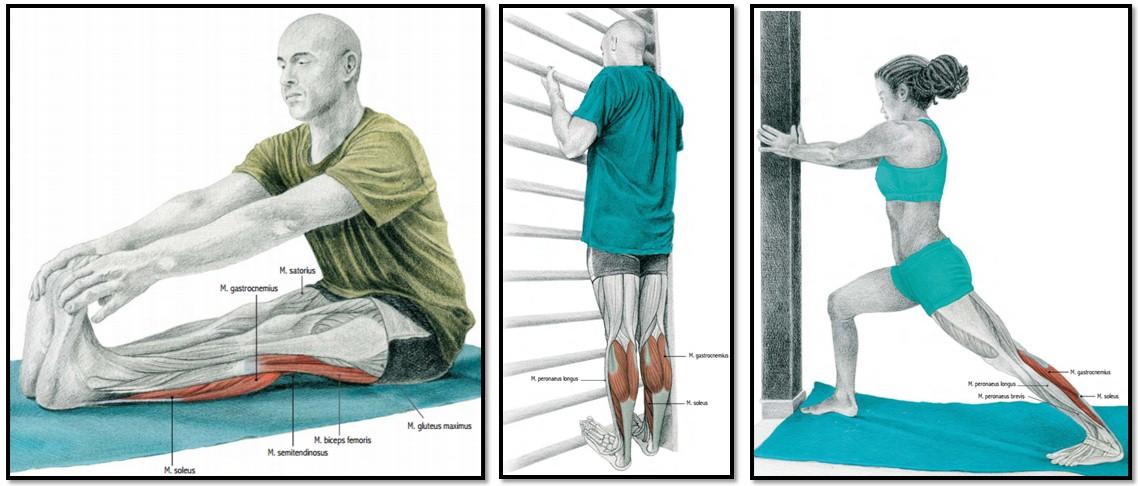 Эффективная растяжка икроножных мышц в домашних условиях