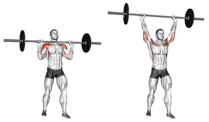 Жим штанги стоя и сидя: польза и вред. уровень нагрузки мышц